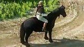 Video Kingdom Come Deliverance - Horses